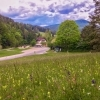 Gutenstein Alps flower meadow in spring