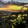 Wachau walk vine and sunset